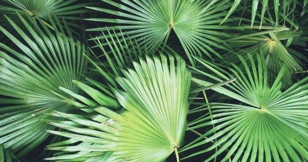 Un petit air de vacance https for Fausse plante palmier