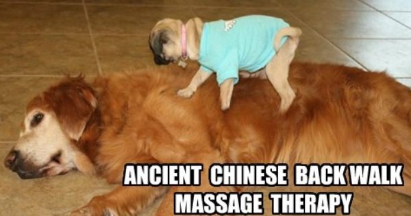 Funny Dog Massage Come To Fulcher S Therapeutic Massage In Imlay