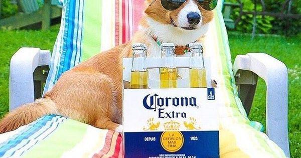 Keep Calm And Enjoy Corona Beer Corgipup Coronabeer Corgi