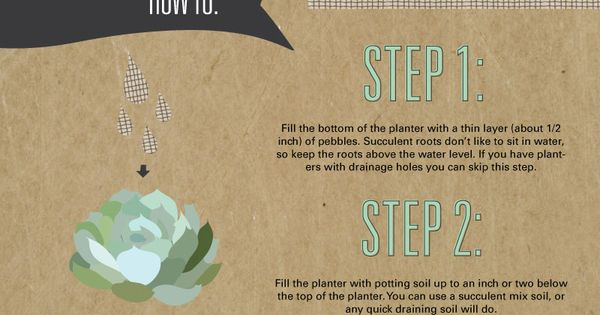 TOP 10 DIY Outdoor Succulent Garden Ideas