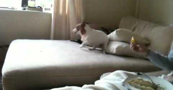 Dog eats bitter lemon