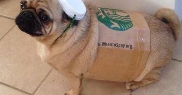 How about a Starbucks coffee cup costume for your pug? # ...