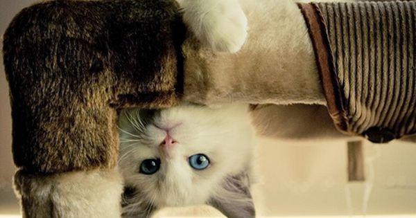 Cat tower!