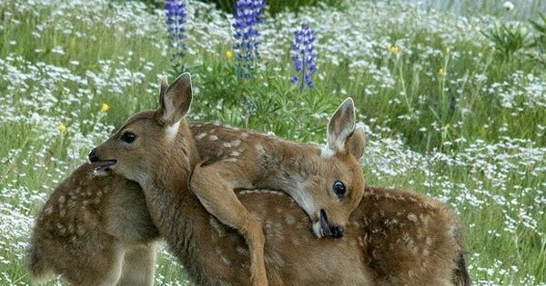So sweet to see the love between siblings, especially in nature. (Source: