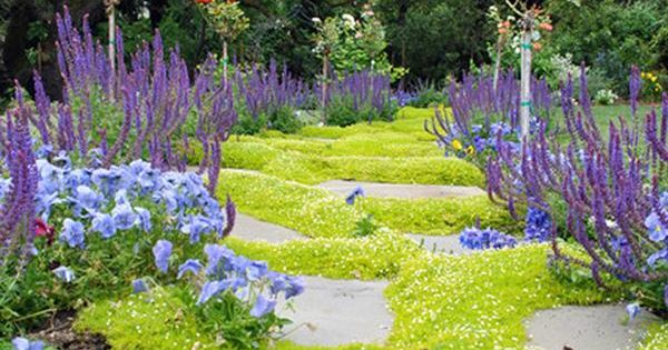 Low-Maintenance Lawn Alternatives: Ground Cover | Lawn ...