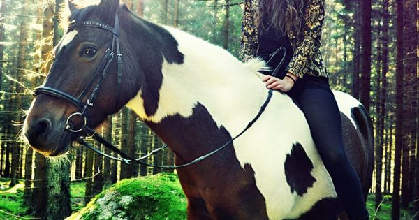 horse - Click image to find more Photography Pinterest pins