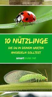 Nutzlinge Im Garten Ansiedeln Kleine Biologische Helfer Amazinggardenflower Ansiedeln Land Scape