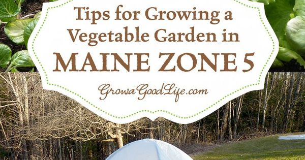 Vegetable gardening tips for maine zone 5 environmental factors summer heat and gardens - Gardening in summer heat a small survival guide ...