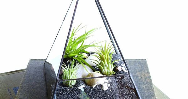 Air plant terrarium glass pyramid planter