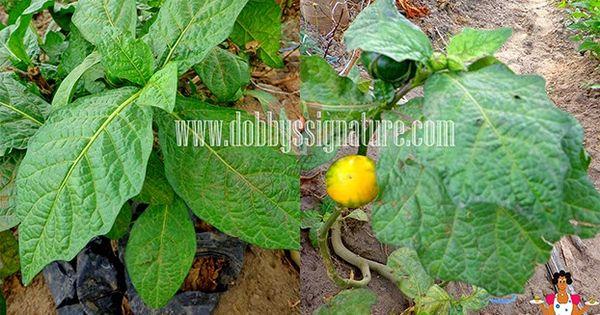 Secret Garden Natural Health Benefits