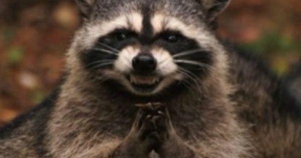 Lets Make This Happen Evil Raccoon Meme Generator