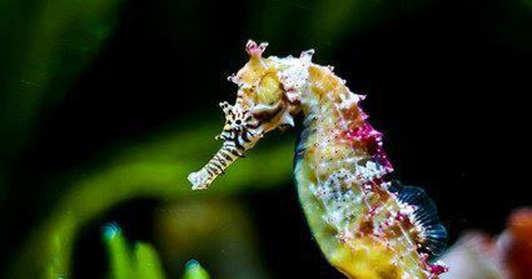 colorful beauty sea horse