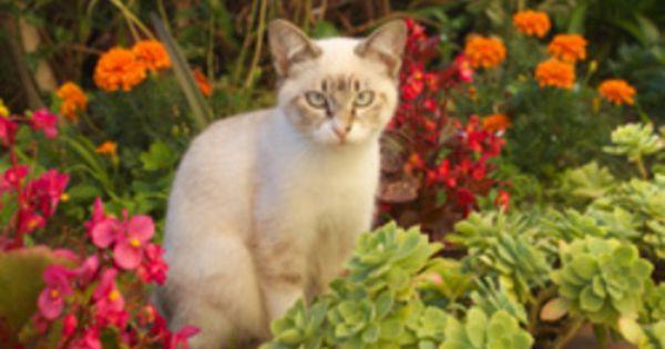 Kaffeesatz Gegen Katzen Schnecken Einsetzen So Klappt S Blumenbeet Anlegen Baumtomate Katzen