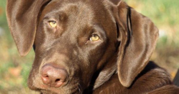 Pin On Doggie Dogz World