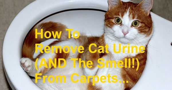 How To Remove Cat Urine (AND The Smell!) From Carpets ...
