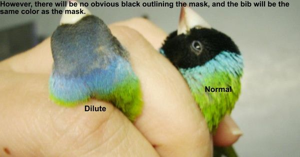 Normal black head and ...