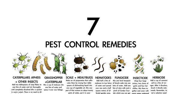 7 Pest Control Remedies Urban Farming Pinterest