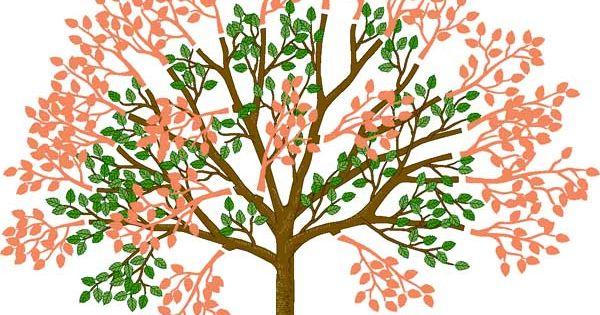 kirschb ume im sommer schneiden garten gardens and bonsai. Black Bedroom Furniture Sets. Home Design Ideas