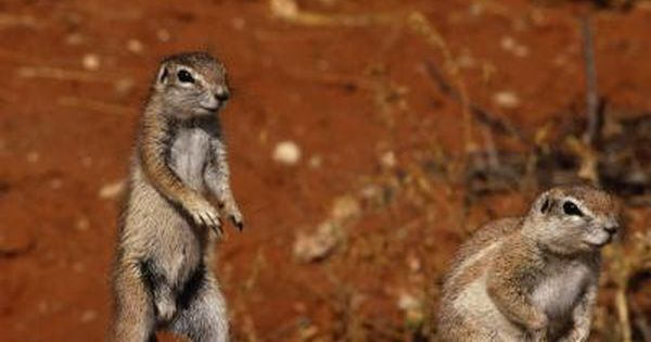 How To Get Rid Of Squirrels With Baking Soda Squirrel Soda And Gardens