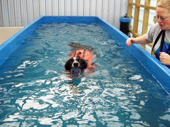 Dog Swim Spa Is A Custom Made Dog Swimming Spa Pool Built On Our 10 Acre Property In Templeton Christchurch Only 6km Dog Swimming Pools Dog Swimming Dog Pool