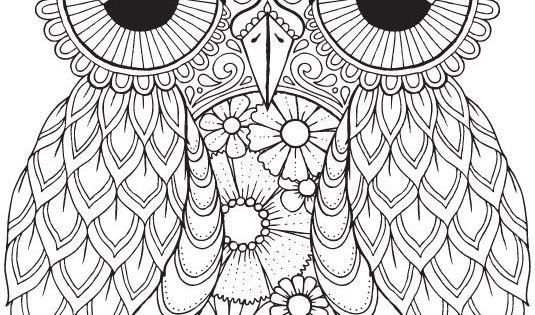 Seth Owl Color Me Hola ANGEL