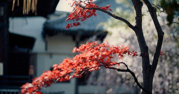 thekimonogallery: Zen Garden, Japan