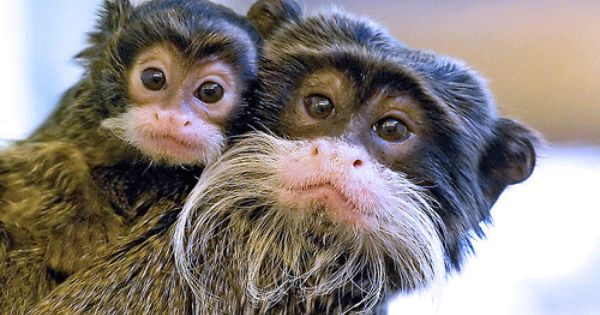 There Are So Many Species Of Monkeys In The Amazon Rain Forest