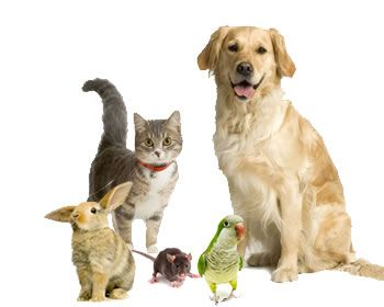Cats And Dogs In Harmony Animal Reiki Animals Pets