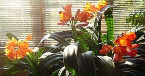 Beste Slaapkamer Plant : Verandas and Deco on Pinterest