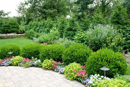 Landscaping Bushes