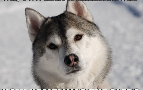 sled dog humor