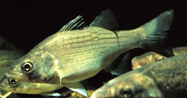 How To Get Rid Of Fish Lice In Aquarium