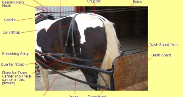Harness Parts Explained With Graphics Horse Tack