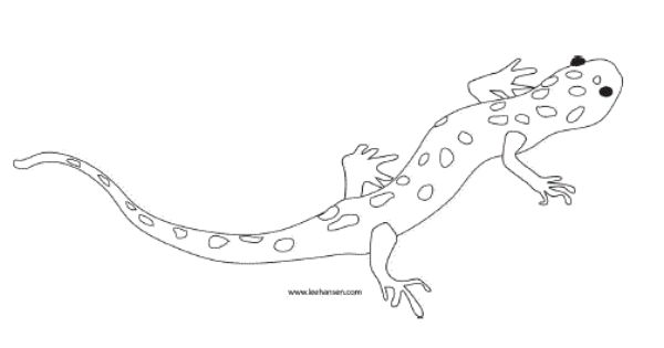 Printable Salamander Coloring Page Coloring Pages Reptile Crafts Animal Projects