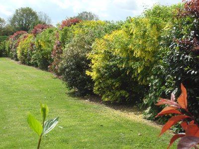 Une Haie Champetre Tres Decorative Scenes De Jardins Idees