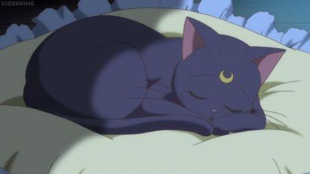 Sleepy Cat Anime Luna Sweet Cute Sleep Kitty Sleeping