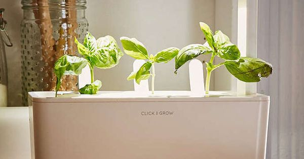 Countertop Herb Garden Kit : Herb Garden for a Kitchen Countertop: Gardenista Container gardens ...