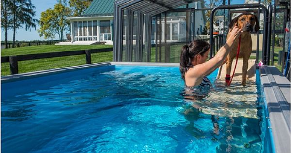 With Their Fully Adjustable Swim Current And Compact Size Endless Pools Are Ideal For Aquatic