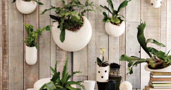 Wall hanging planters (West Elm, $19-69) Notice baby staghorns and mini-orchids.
