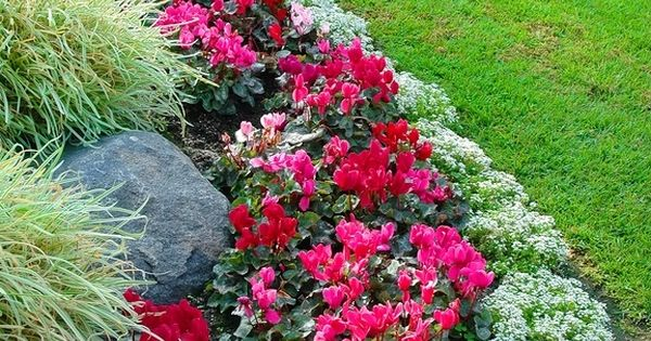 Flower Bed Border Idea Alyssum Begonia And Ornamental