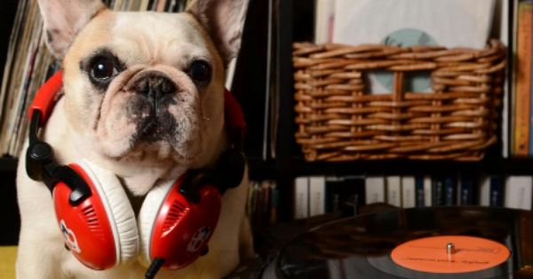 15 Craigslist Ads A Crazy Dog Person Would Totally Write Maybe Dogs Crazy Dog French Bulldog