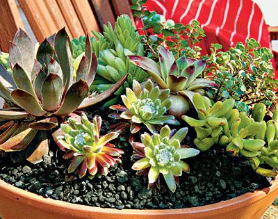 Planting Succulent Containers: Step One - How To Plant Succulents in Containers