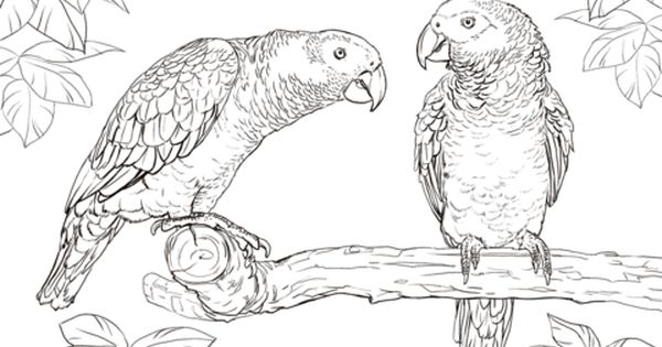 Two African Grey Parrots Coloring Page Free Printable Coloring Pages African Grey Parrot Animal Coloring Pages Bird Coloring Pages