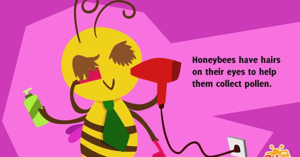 Fun #Facts for Kids Honey #bees - Cikgu.tv #e-learning for ... - photo#40