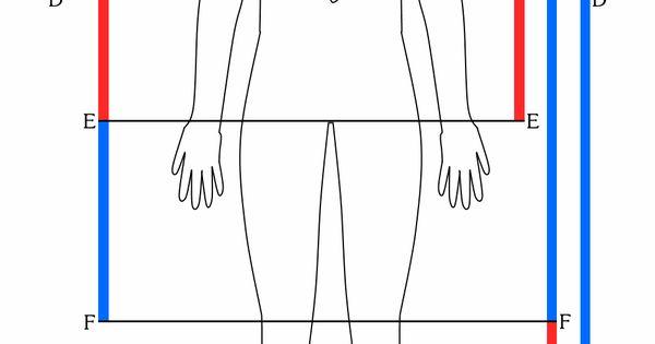Divine Proportions | divine proportion