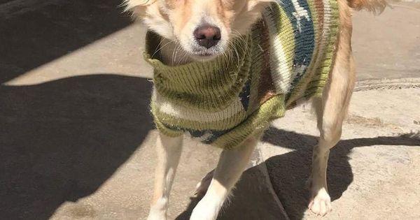 Adopt Aurora On Petfinder Adoption Pets Dogs