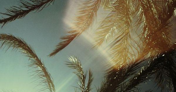 ...palm tree light, palm beach.