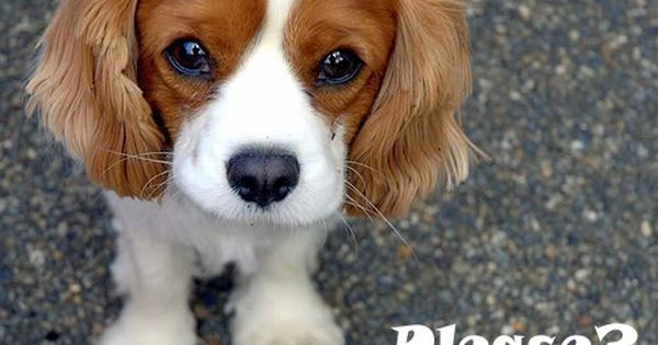 How To Handle A Dog Begging For Food Cute Animals Baby Animals