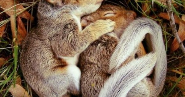 The cutest picture on the entire internet. Baby Squirrels - Sleeping -