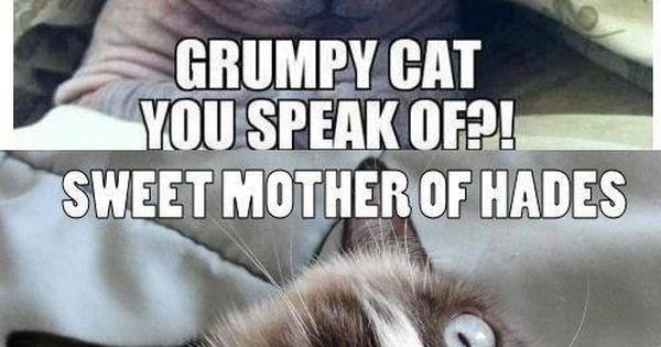 hairless cat vs grumpy cat